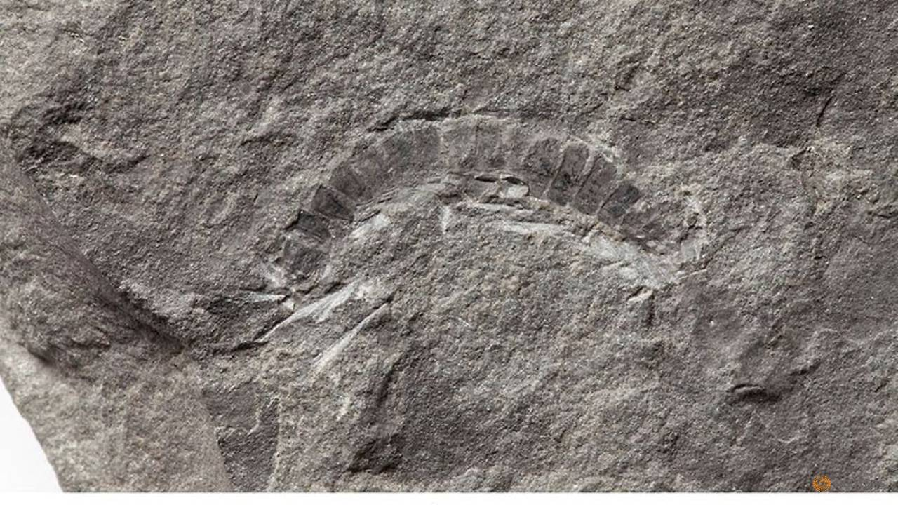 Photo of Millipede from Scotland is world's oldest-known land animal