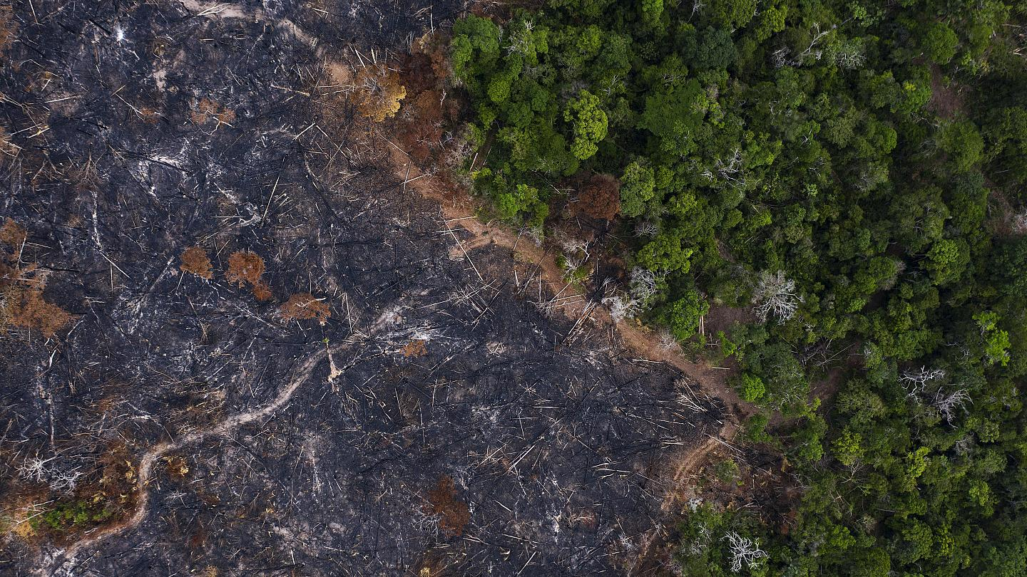 Photo of Destruction of nature is 'driver of pandemics', says WWF