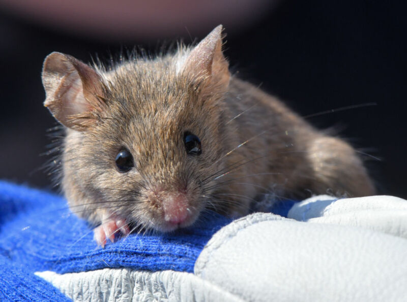Photo of Neurons discovered that put mice in a hibernation-like state