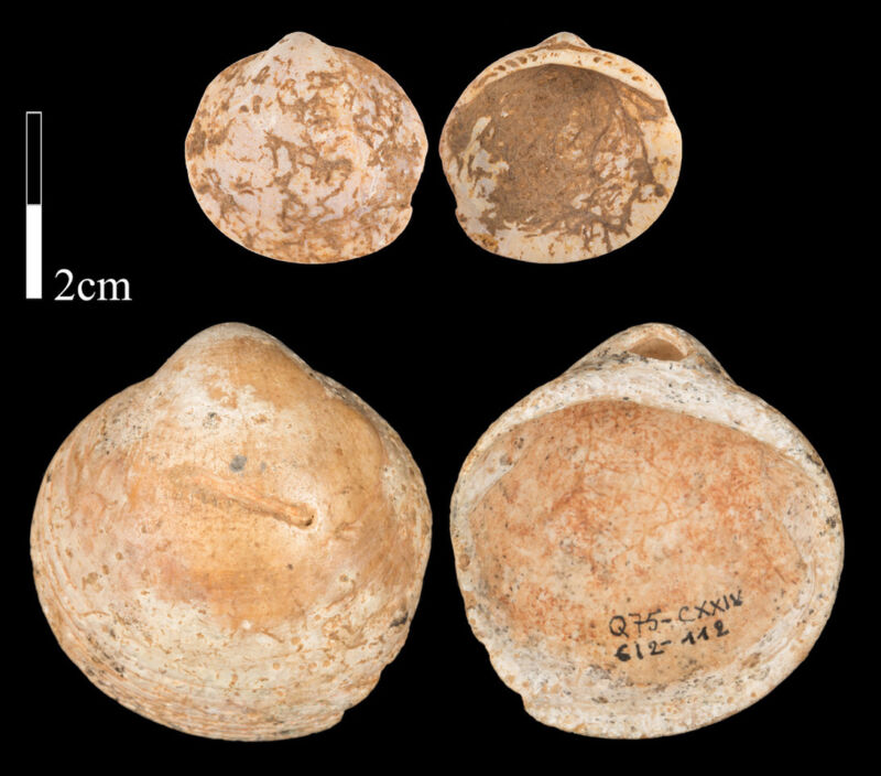 Photo of Ancient seashell beads may help unravel the origins of string