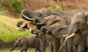 Photo of Hundreds of Elephants Found Dead in Botswana in Mysterious Mass Die-Off