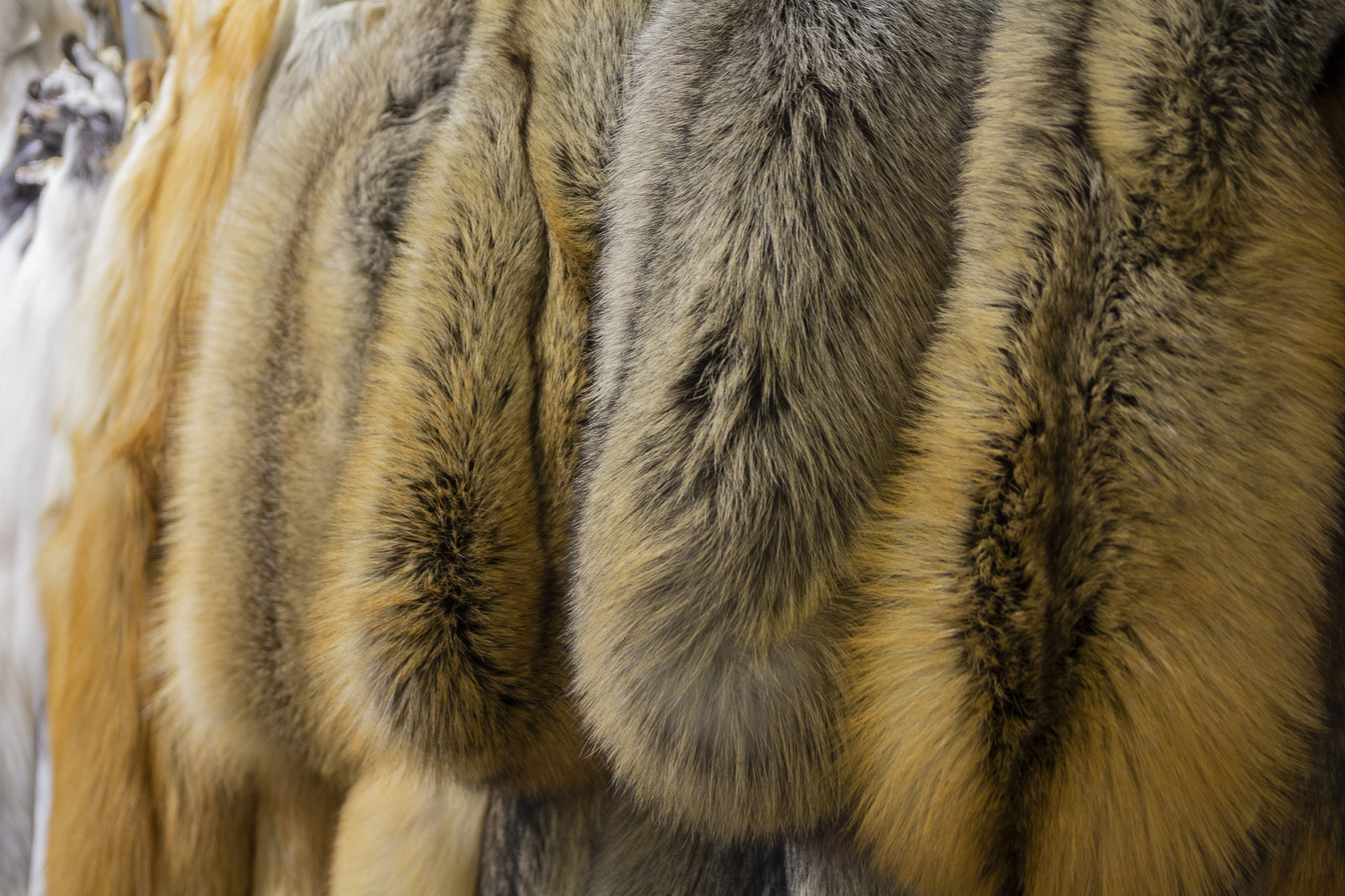 Photo of UK plan to ban fur trade sparks questions for Brexit Britain