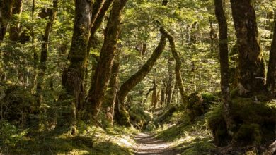 Photo of WHY THE JAPANESE TRADITION OF FOREST BATHING IS A MUCH-NEEDED ANTIDOTE TO LOCKDOWN