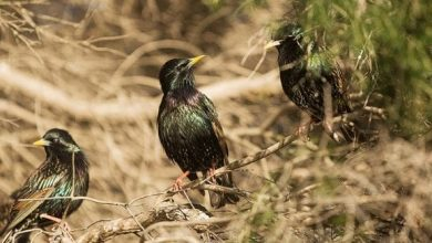 Photo of Birds in the wild outnumber humans by six to one, study finds