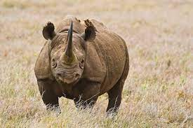 Photo of Ig Nobel Prize: Awards recognise research into upside-down rhinos and discarded chewing gum